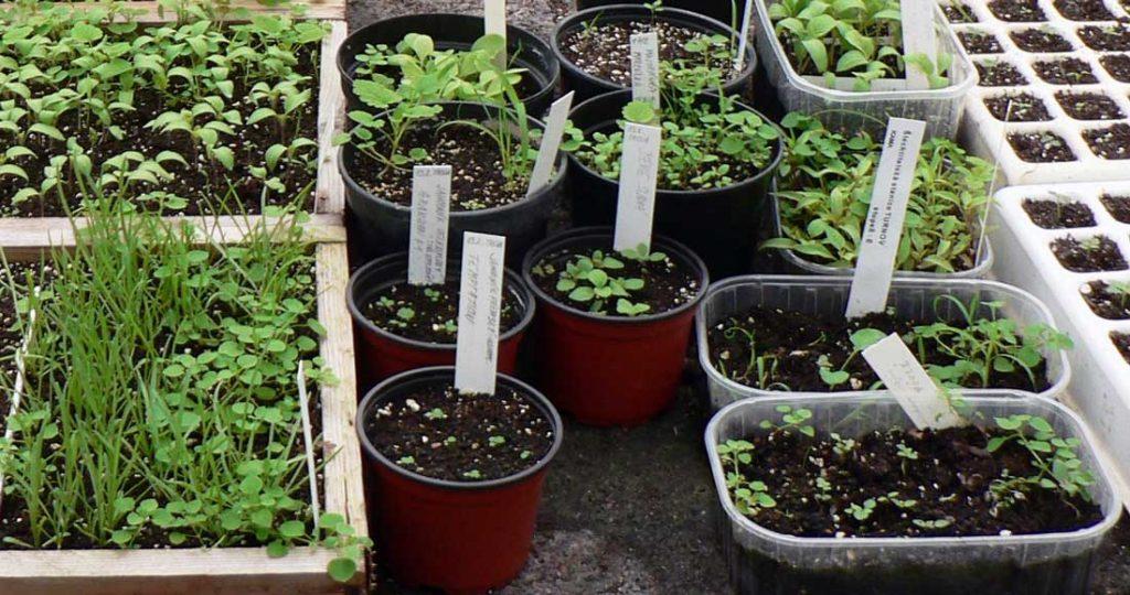 Různé nádoby pro výsevy zeleniny