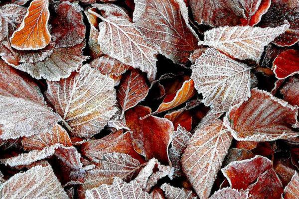Bukové listí na podzim