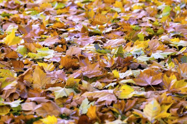 Listí jako rostlinný odpad