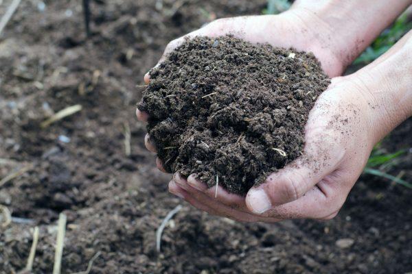 Kompost pokládají mnozí za nenahraditelné hnojivo