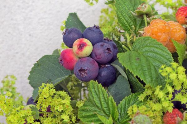 Vonička s malinami, ostružinami a plody muchovníku