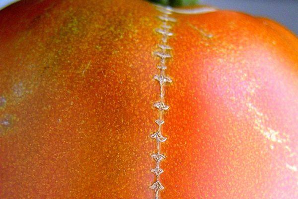 Rajské zdrhovadlo aneb deformace rajčete