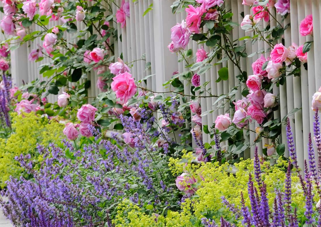 Květiny různých barev a velikostí tvoří povedenou zahradní kompozici