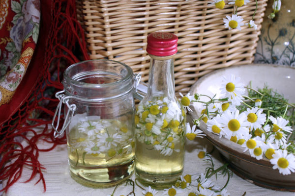 Květy heřmánku v oleji