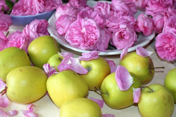 Jablka a lístky růže