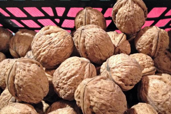 Vysušené Ořechy k uskladnění