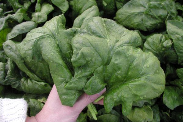 Lazio, listový salát