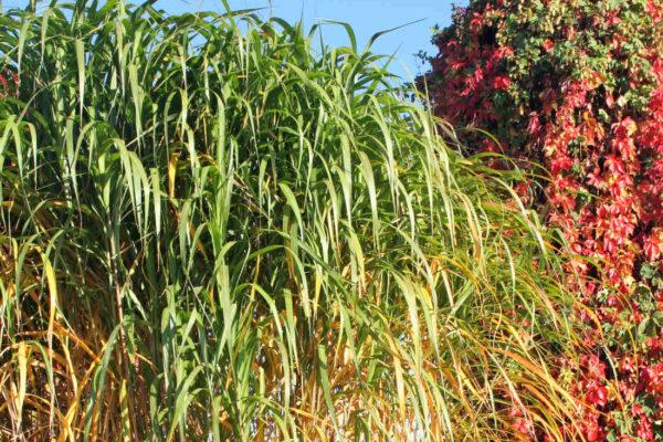 Podzimní barevnost trav a listů
