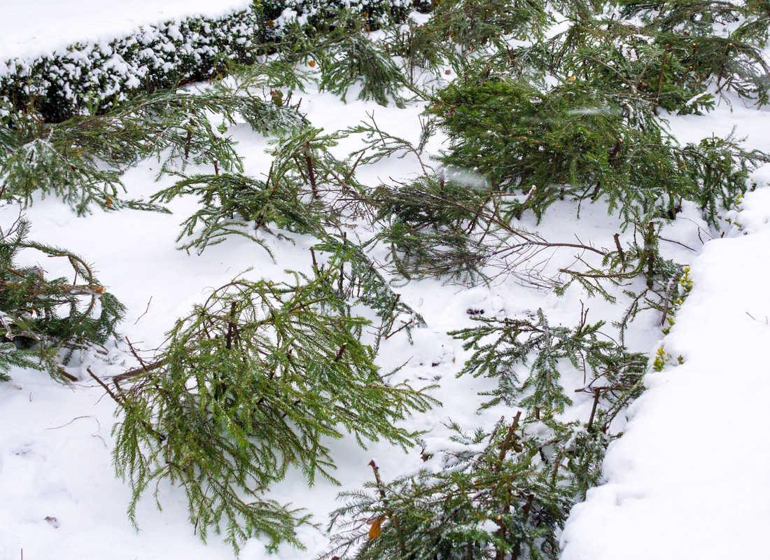 Chvojí chrání rostliny