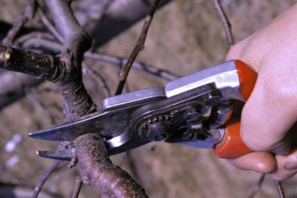 Střihací zahradnické nůžky