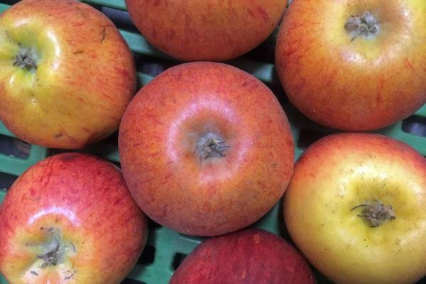 Malá jablka také jablka