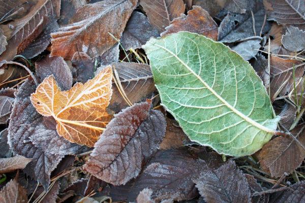 Přikrývka z listí