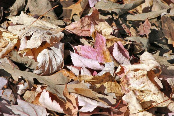 Spadané listí uložíme v zimě do pařeniště