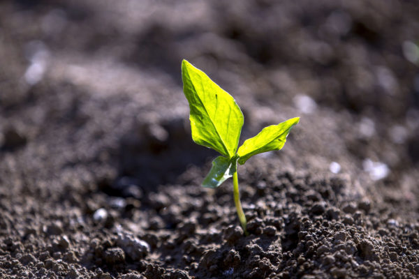 Půda pro život