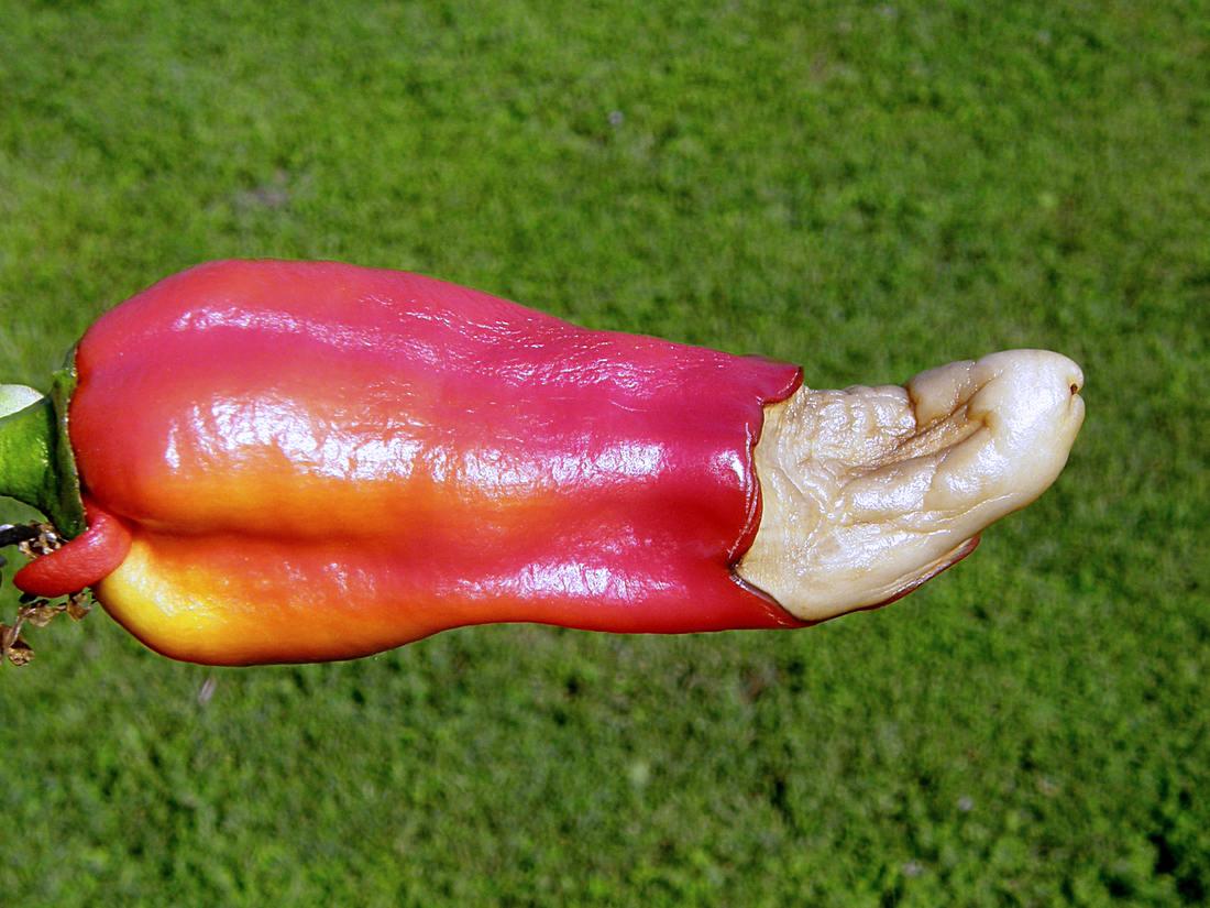 Paprice chybí vápník