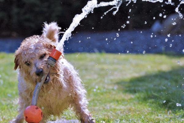 Psi si rádi hrají