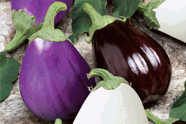Lilek fialový, bílý, tmavý