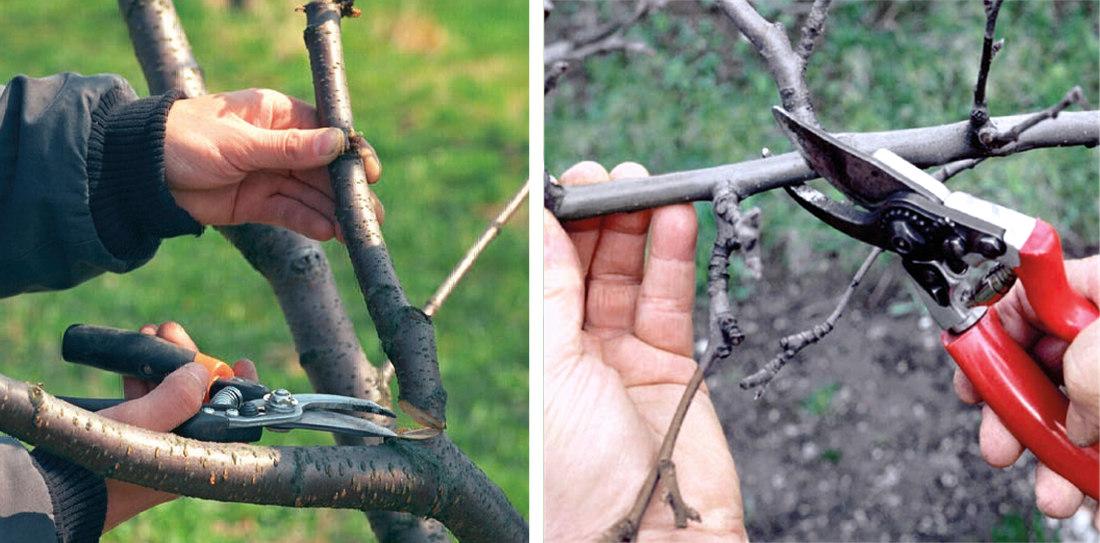 Nužky pro řez stromů