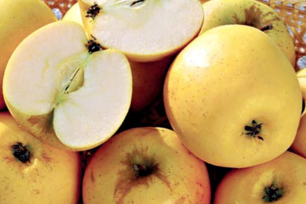 Jablka Sirius