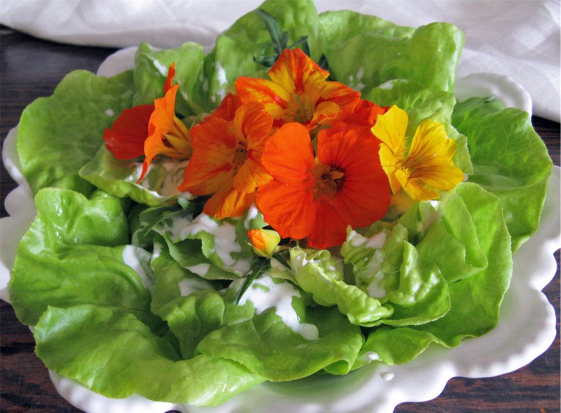 Lichořeřišnice salát ozdobí a dá mu pikantní přichuť