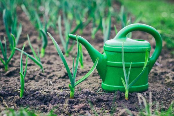 K letnímu záhonu zeleniny patří - konev