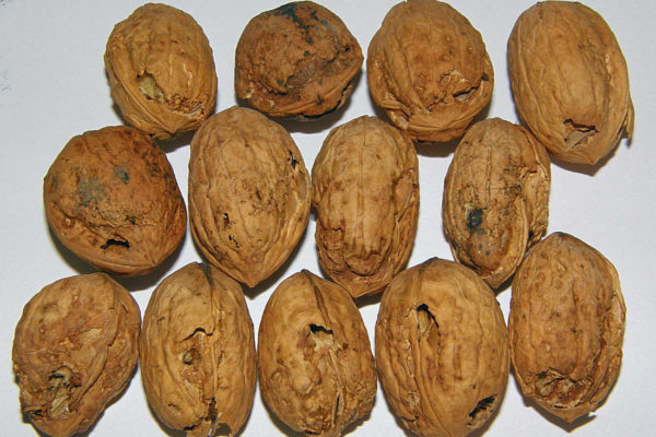 Skořápkám ořechu chyběl vápník, potažmo správný vývoj