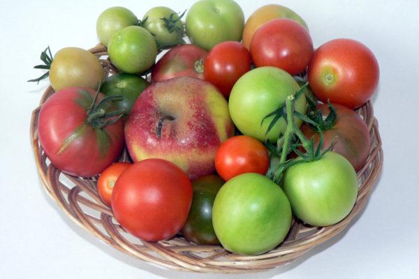 Podpora dozrávání rajčat