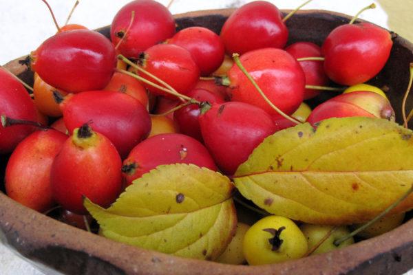 Šípková jablíčka