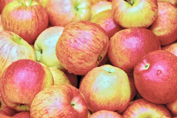 Podzim je barevný také díky jablkům