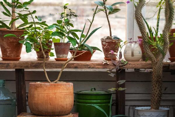 Přenosné rostliny pod střechou