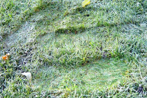 V mraze není radno šlapat na okrasný trávník