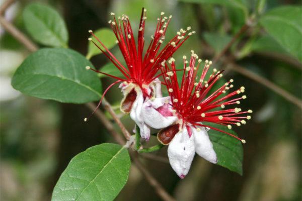 Krásné květy daly dřevině punc okrasné rostliny