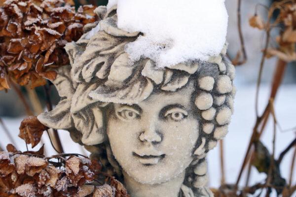 Hortenzie jsou krásné v létě i v zimě