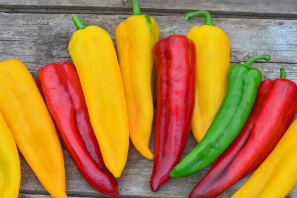 Příbuzné italské odrůdy papriky Corno Rosso a Giallo