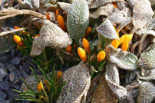 Jaro na trvalkovém záhoně