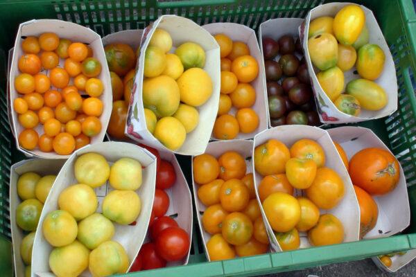 Různé barvy rajčat