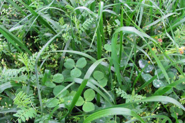 Směska zeleného hnojení