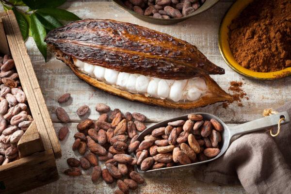 Kakaové boby jsou ukryté v bobuli a obaleny míšky
