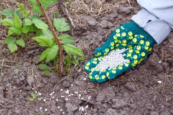 Také rostliny potřebují doplňovat živiny
