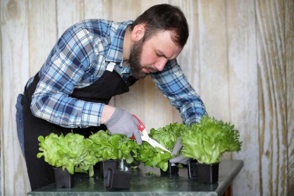 Listový salát z květináčů