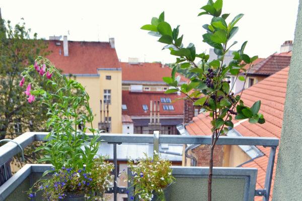 Rostliny na balkoně ve městě potěší